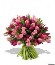 Тюльпаны оптом и в розницу!