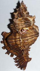 Морская экзотика