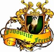 Хорьки. питомник Favourite Ferret