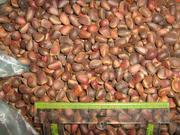Продам кедровый орех,  урожай 2011г