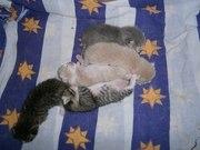 Отдам 5 замечательных котят