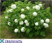 Продам саженцы плодовых, ягодных, декоративных культур, многолетнии цветы