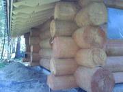 Срубы из Крупного Кедра 54 м2 диаметр 60 см