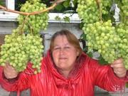 Саженцы местного винограда и пр.садовых культур
