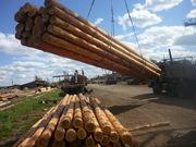 Продам деревянные опоры ЛЭП,  Столбы,  Энерголес,  Лиственница
