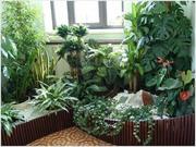 зеленая ноль три уход за комнатными растениями
