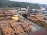 Продам лес кругляк разных пород!